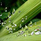 Drops by maijo moris