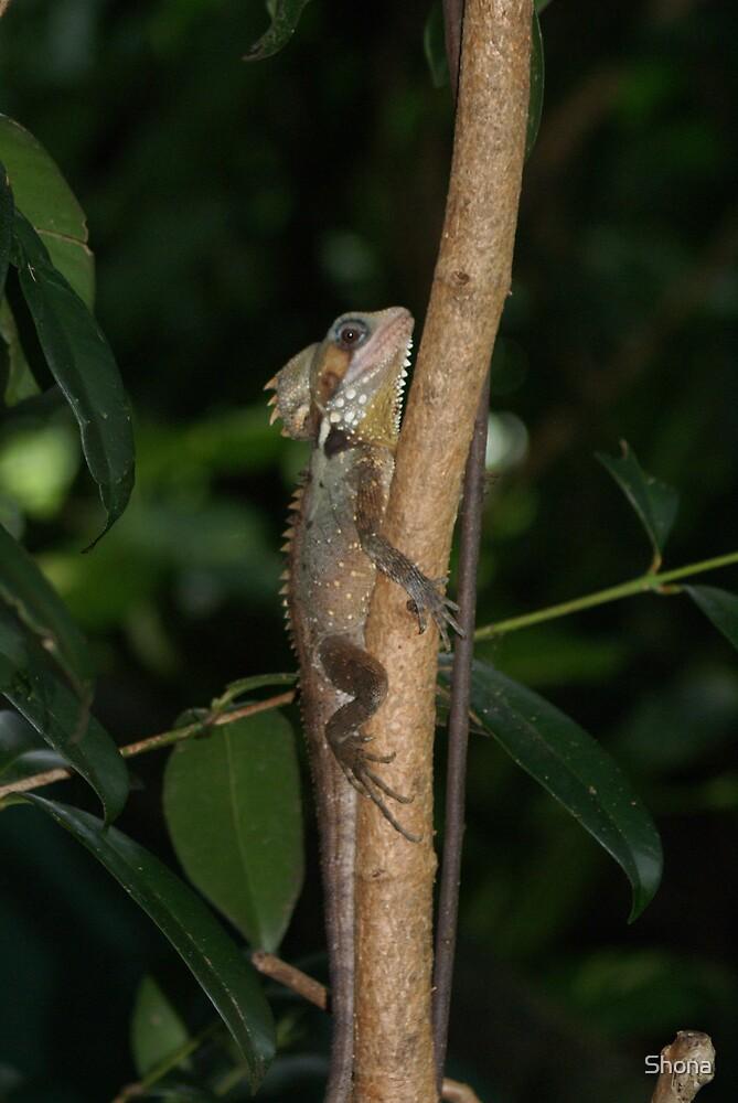 Little Lizard by Shona