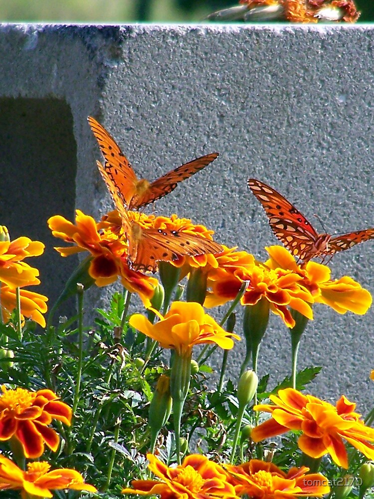 butterfly trio by tomcat2170