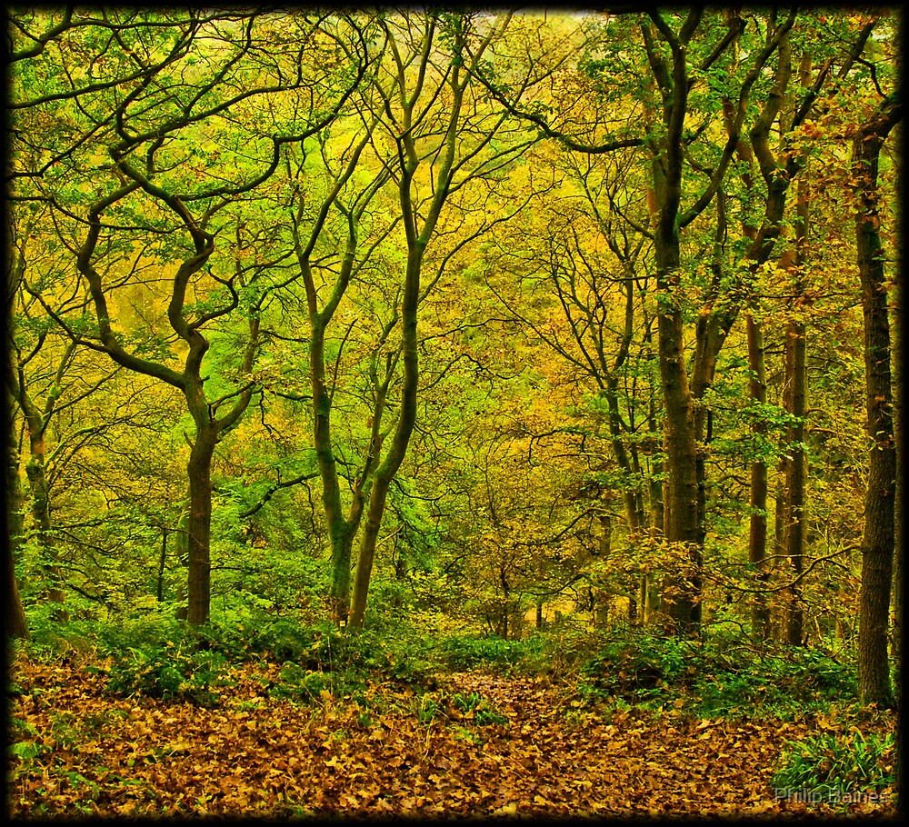 Shapes and Colours of Autumn by Philip Baines
