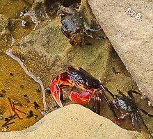 Got Crabs? by Stephen Forbes