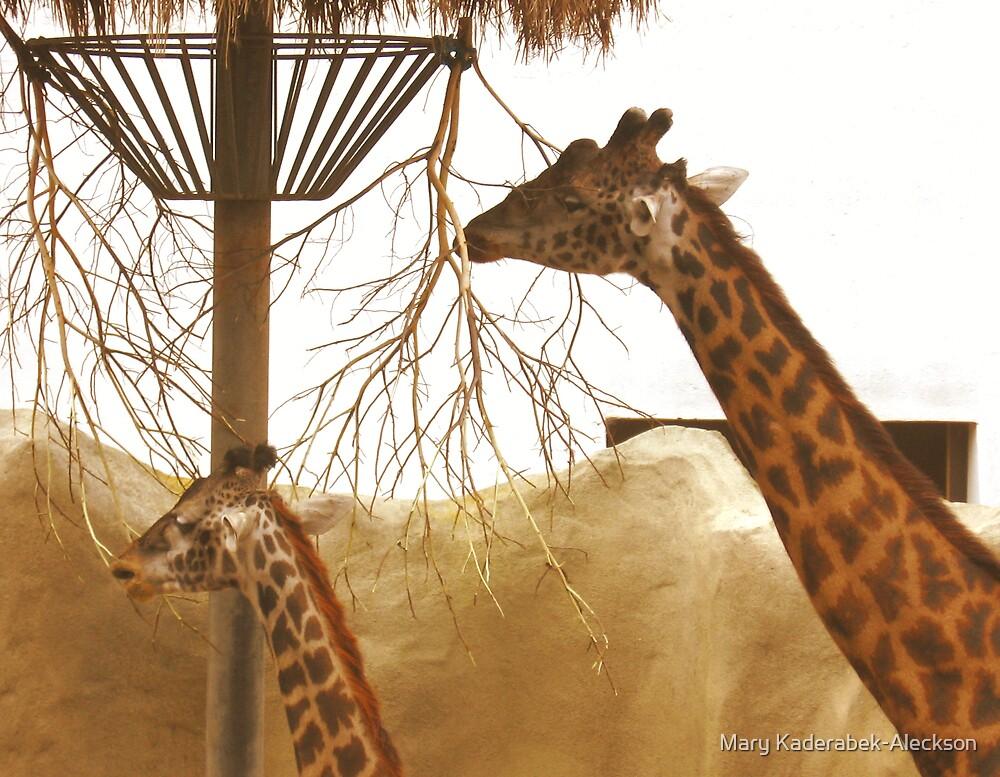 Giraffes   by Mary Kaderabek-Aleckson