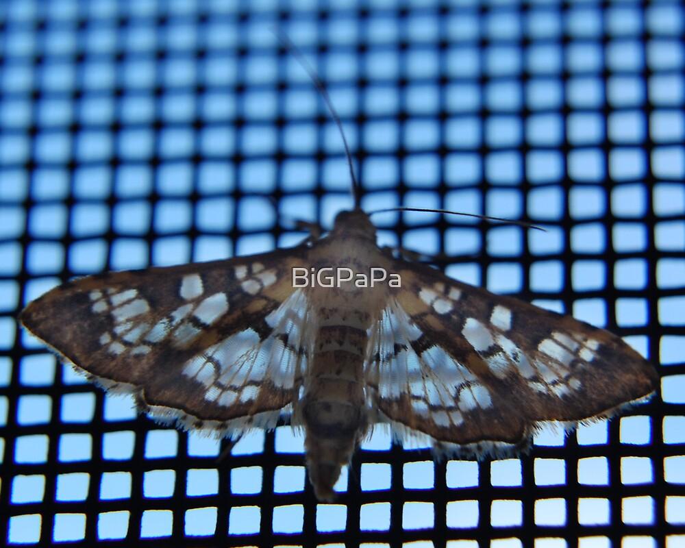 Moth chillin by BiGPaPa