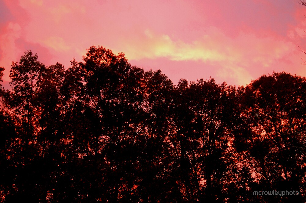Trees on Fire by mcrowleyphoto