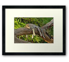 The Leopard Sleeps Tonight Framed Print