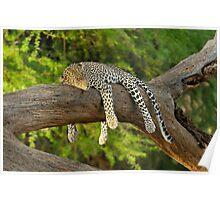 The Leopard Sleeps Tonight Poster