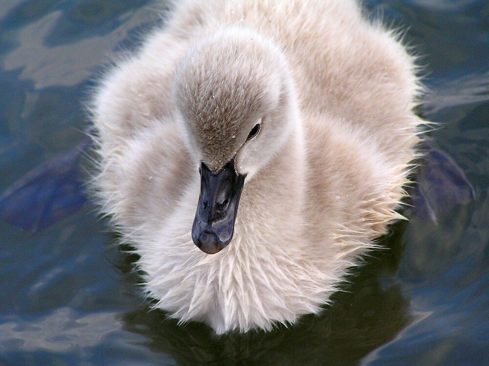 I Be Big Swan One Day by Nicmutt