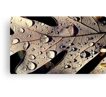 Sprinkled Leaf Canvas Print