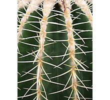 Close-Up cactus Photographic Print
