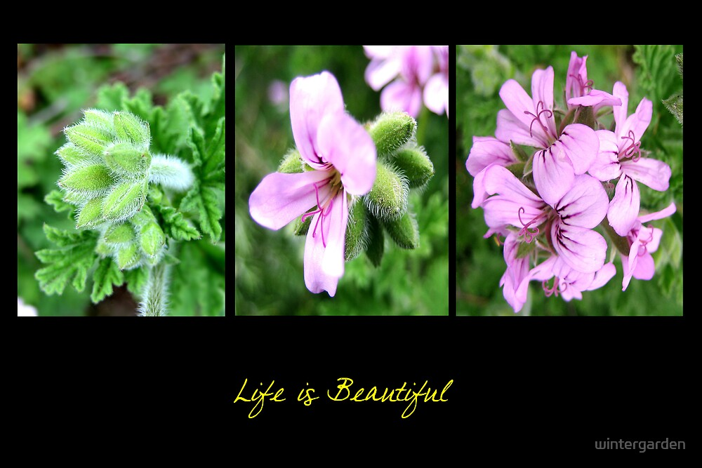 Life is beautiful by wintergarden
