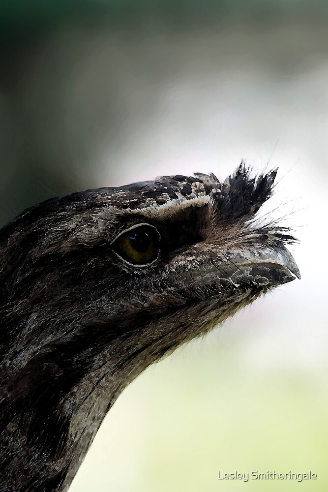 Tawny Frogmouth Portrait by Lesley Smitheringale