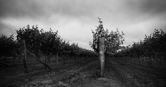 Vine # 25 by Evan Schoo