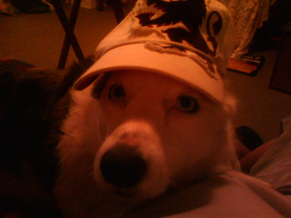 my dog with my cap lol by Tristan :)