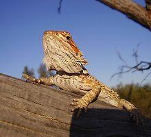Lizard by Tristan :)