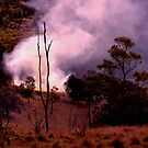 Bush fire by Virginia McGowan