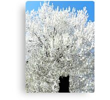 The Snow Tree #2 Canvas Print