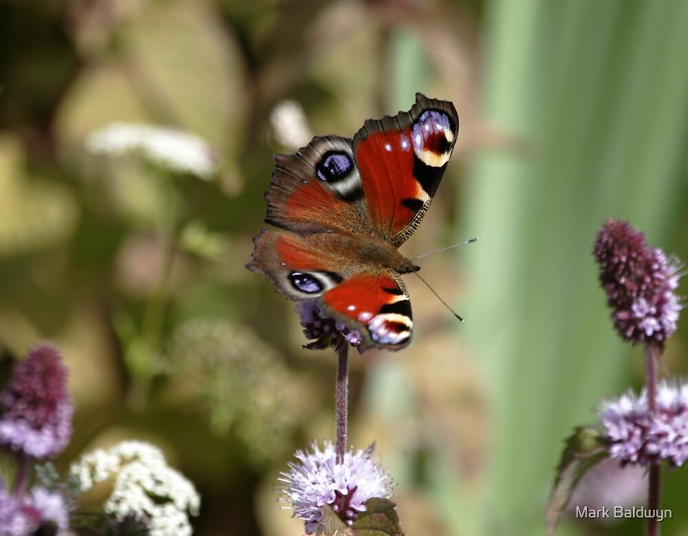 Peacock Butterfly by Mark Baldwyn