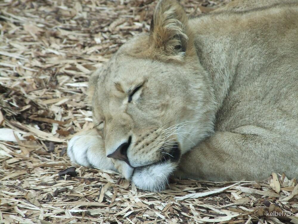 A Sleeping Beauty by kelbel75