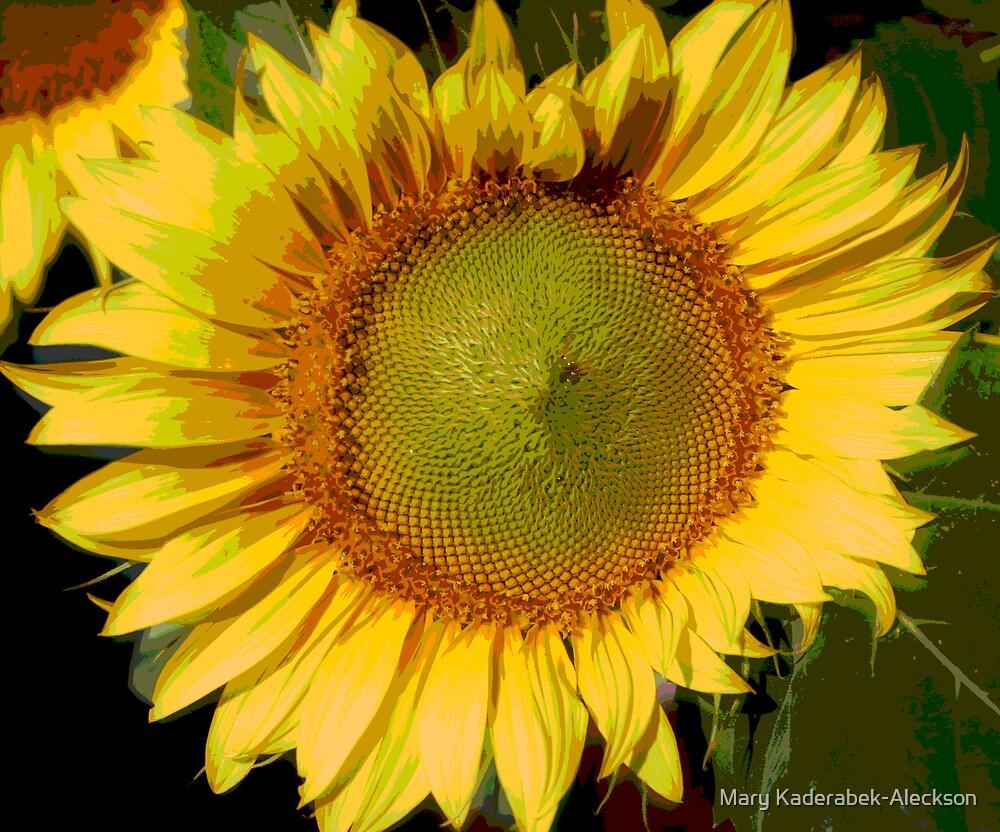 Sun  Flower by Mary Kaderabek-Aleckson