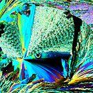 Rainbow Fish by Crystallographix