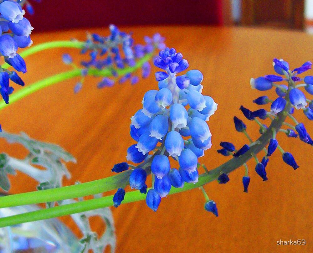 Blue Bells by sharka69