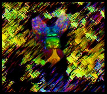 Rainbow fly by sharka69