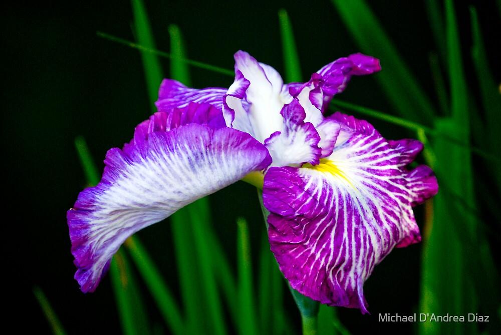 Full Bloom by Michael D'Andrea Diaz