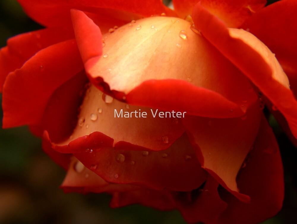 Bed of Petals by Martie Venter