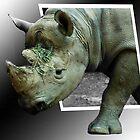 Rhino by dumbomsa
