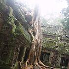 The Ta Prohm Tree..  by liqwidrok