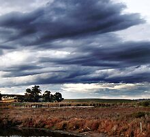 Dramatic Wetlands by Michael Humphrys
