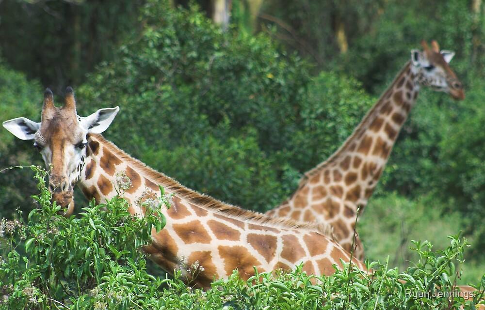 Hungry Giraffes by Ryan Jennings