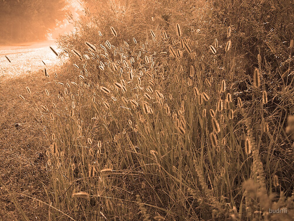 sunlit grass by budrfli