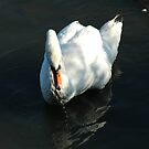 Mute Swan by Catherine Brock