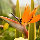 Bird of Paradise by Mark Baldwyn