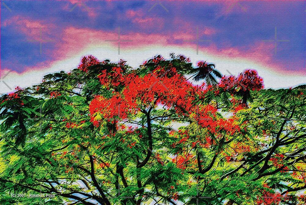 Poinciana Sky by photorolandi