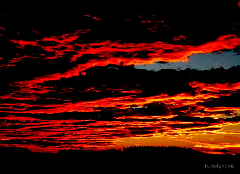The Skys on Fire by forestphotos