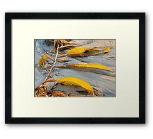 Golden Seaweed and Sunset.  Bacara Beach, Goleta, California Framed Print
