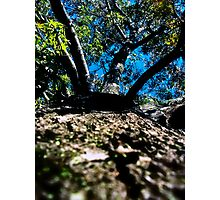 A Tree Grows On My World Photographic Print