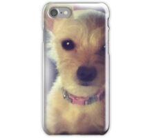 Cutie Chihuahua mix iPhone Case/Skin