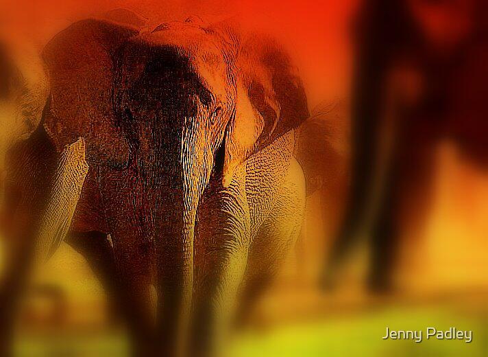 Desert elephant by Jenny Padley