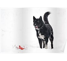 Dog plays in the snow Poster