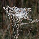 Frosty Web by Gary L   Suddath