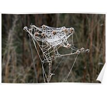 Frosty Web Poster