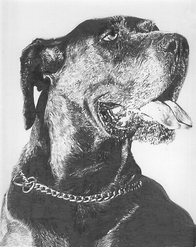 Great Dane Pencil Drawing by onlypencil