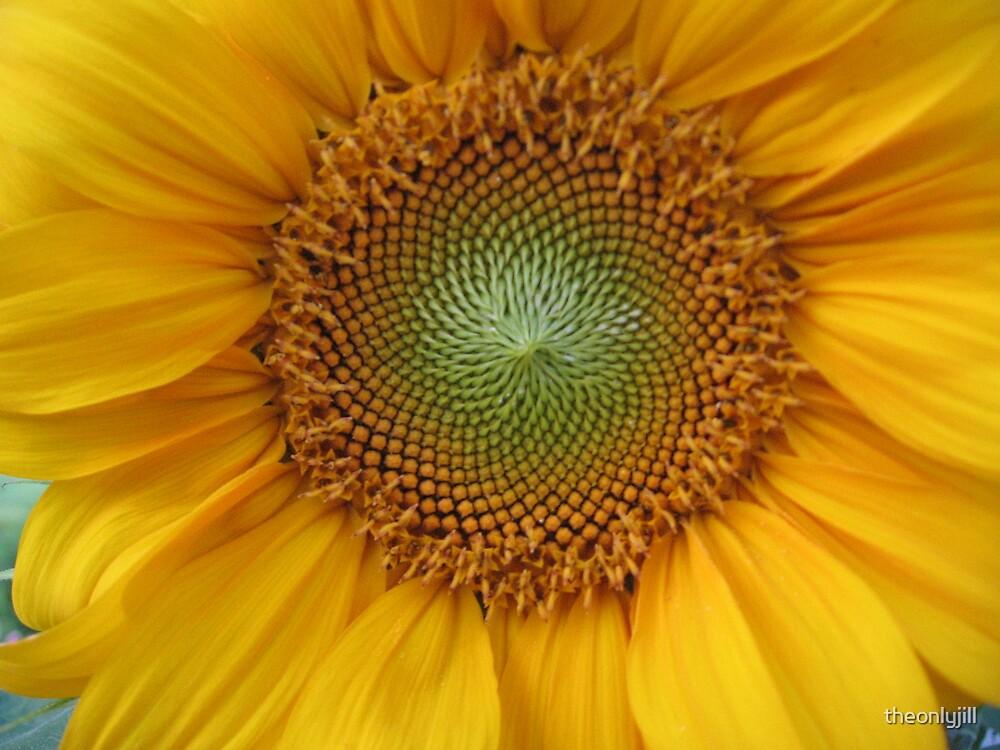 Sunflower by theonlyjill