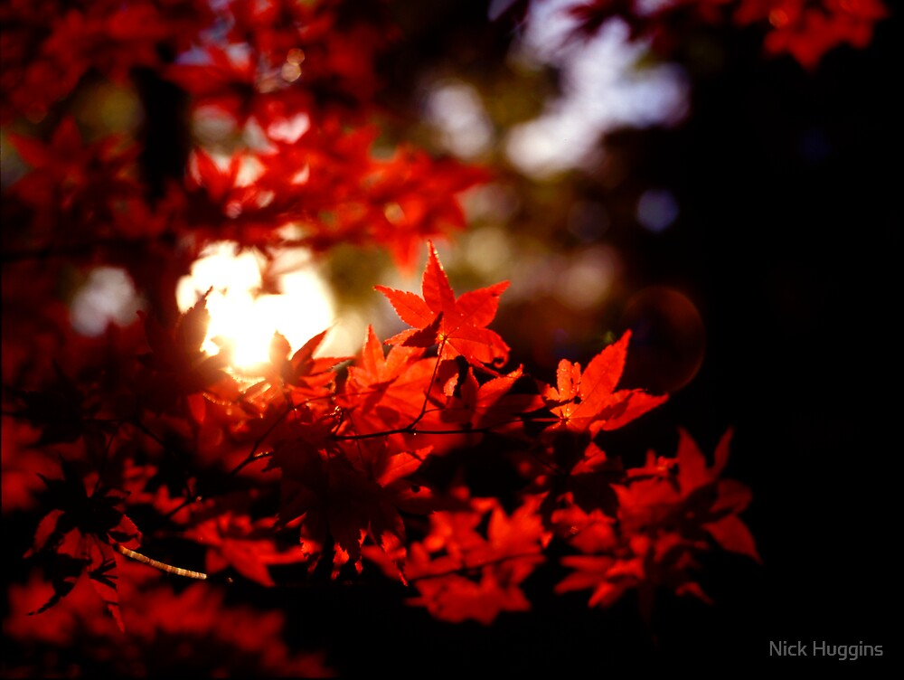 Red Leaves by Nick Huggins