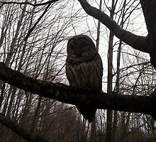Lonely Owl by hgielnorya