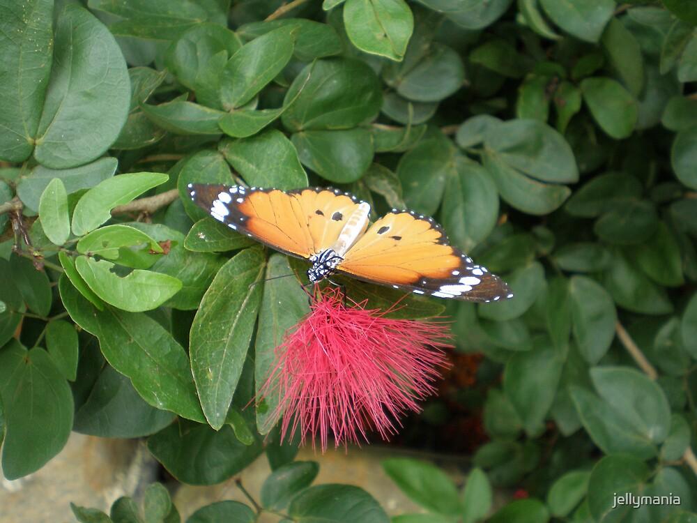 taste of nectar by jellymania