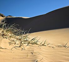 Dune grass by MagnusAgren